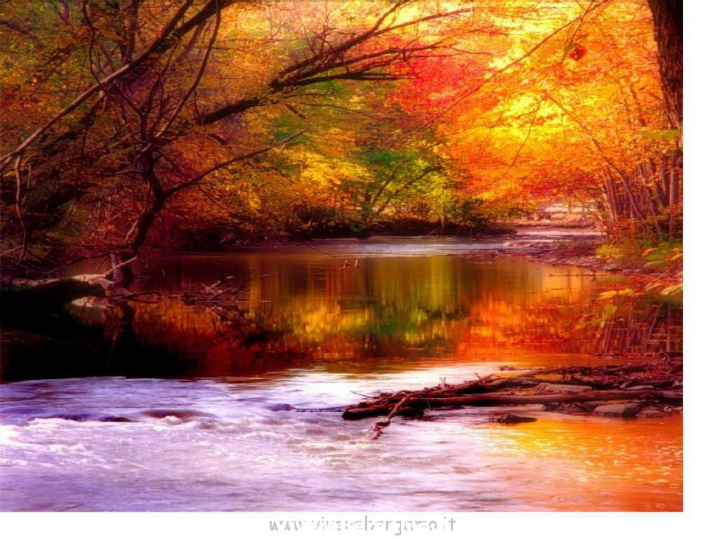 446699-1280x1024-autumn2_ridimensionare