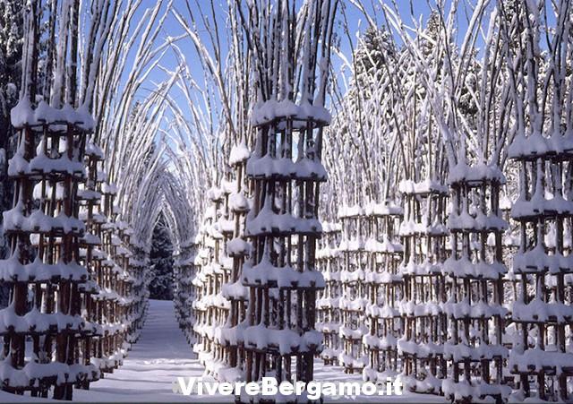 Cattedrale Vegetale oltre il colle valle brembana bg