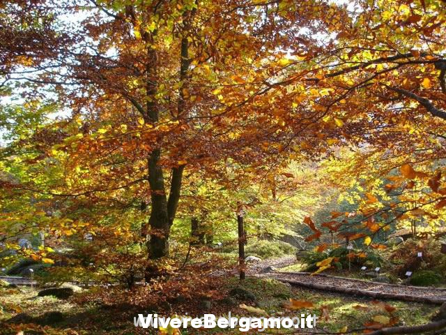 Foliage_GBOropa_a1
