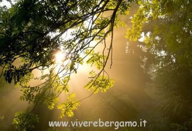 Paesaggio luce tra gli alberi 407979  567   derevya_svet_priroda  (www.GdeFon.ru)