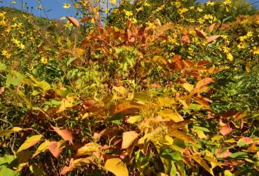 berghem autunno