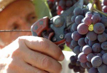 Festa dell' uva Bergamo Trescore Balneario