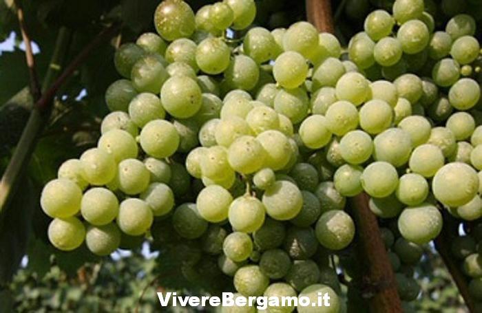 sagra-dell-uva-2016-pontida