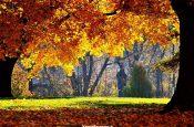 autunno-colori