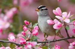 21 marzo equinozio di primavera, rinascita fisica e spirituale