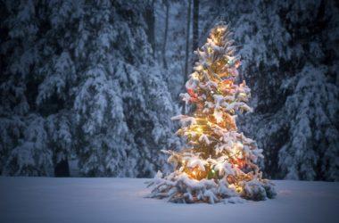 Proèrbe del mis de Desèmber – Proverbi del mese di Dicembre